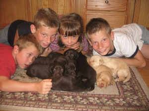 Puppies, puppies, puppies....